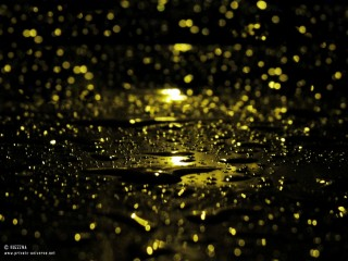 08.09.2011_After-the-rain.th.jpg