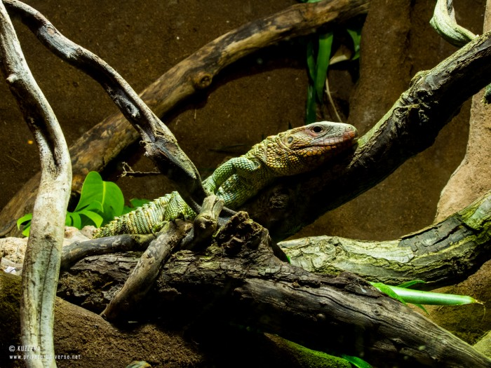 29.05.2013_14.41_London-Zoo--Lizard-2.jpg